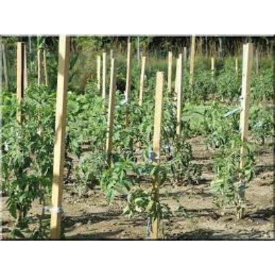 Akác termesztő karó 30x30x1800 mm
