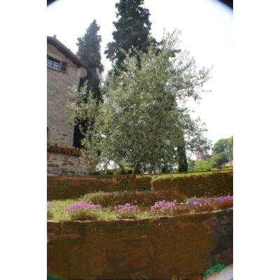 SQUARE műanyag kerti rács 1x5m, barna